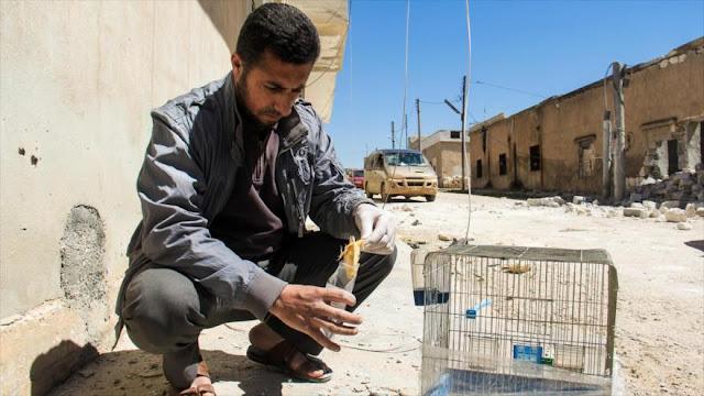 Siria: Sin duda Francia está detrás del ataque químico en Idlib