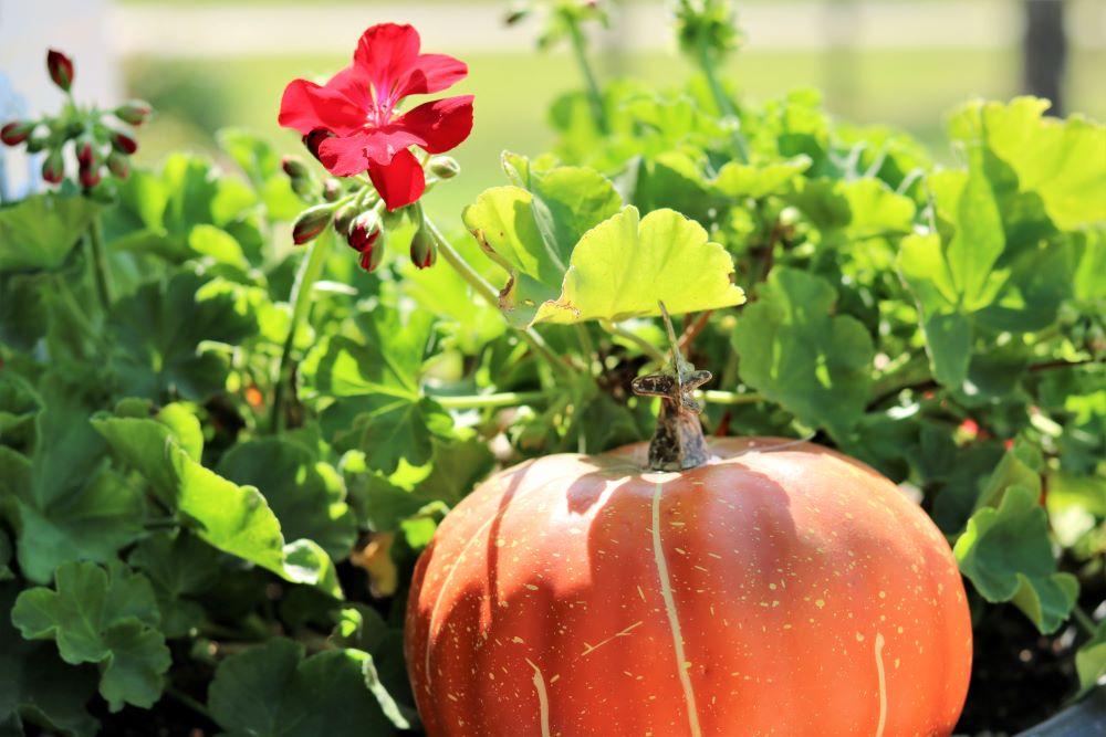 fall-decorating-homemaking-porch-decor-pumpkins-wreath-athomewithjemma