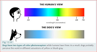 from https://drsophiayin.com/blog/entry/can-dogs-see-color-and-how-do-we-know/