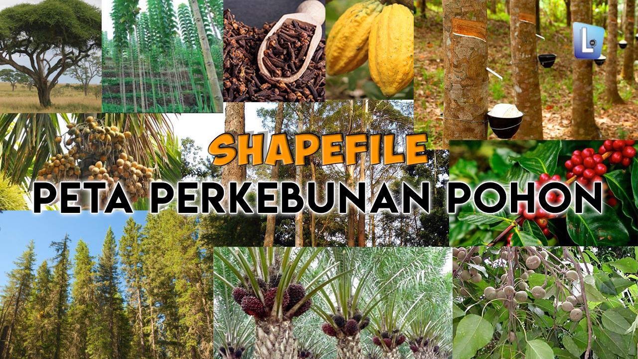 Shapefile Peta Perkebunan Pohon Indonesia