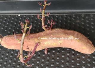 Sweet Potatoes leaves -कांदा भाजी- Uses and Benefits