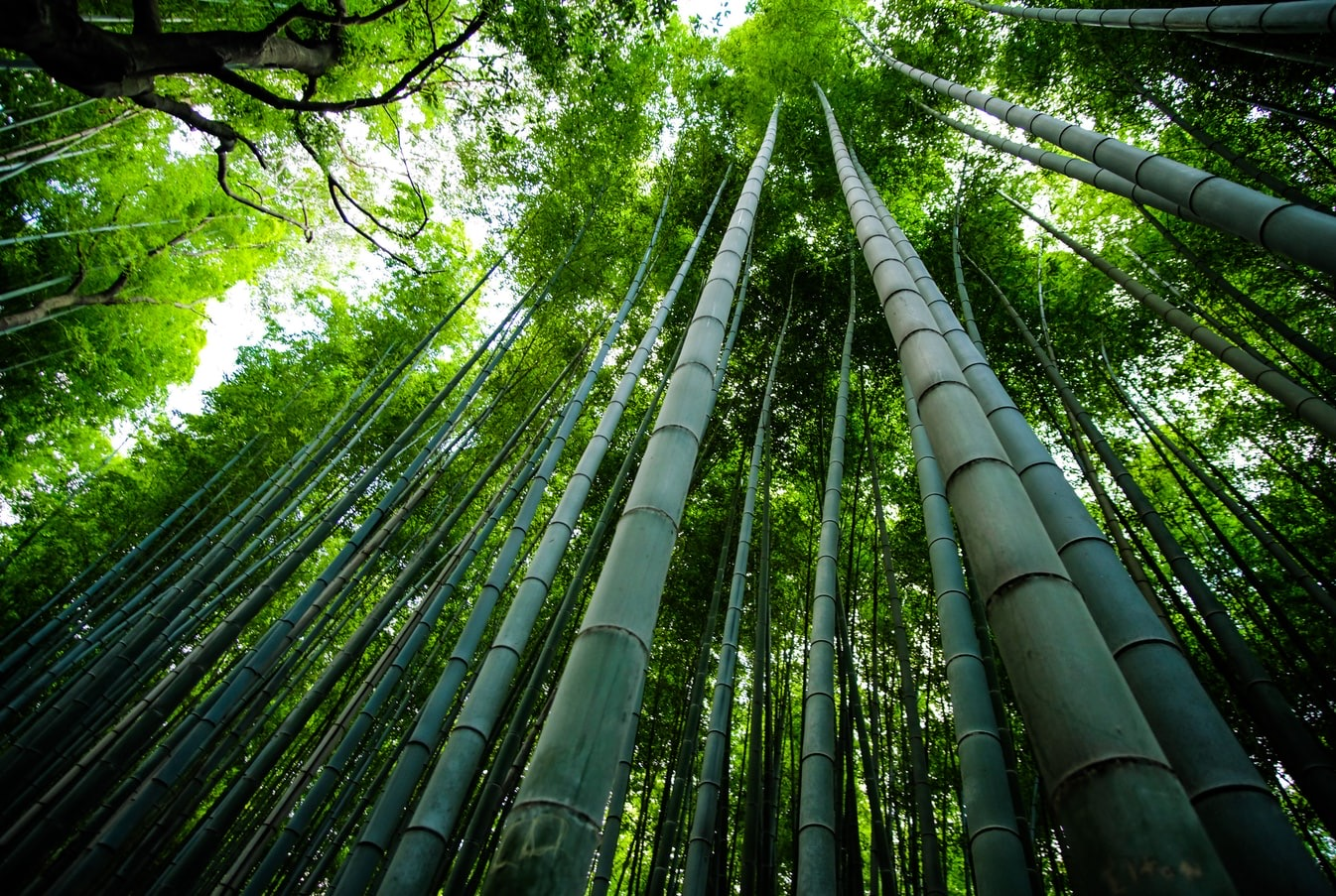 Benefits of bamboo and positives to fight climate change