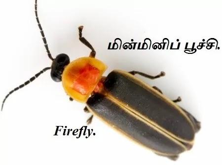 மின்மினிப்பூச்சி - Firefly - Part 1.