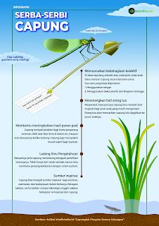 Infografik Capung - Kholil Media