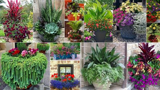 15 Συνδυασμοί Φυτών για Καλοκαιρινές γλάστρες-ζαρντινιέρες
