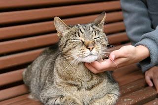 5 consejos para hacer que tu gato te ame más
