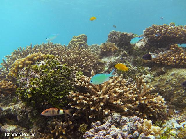 Coral reef in the waters of Manokwari