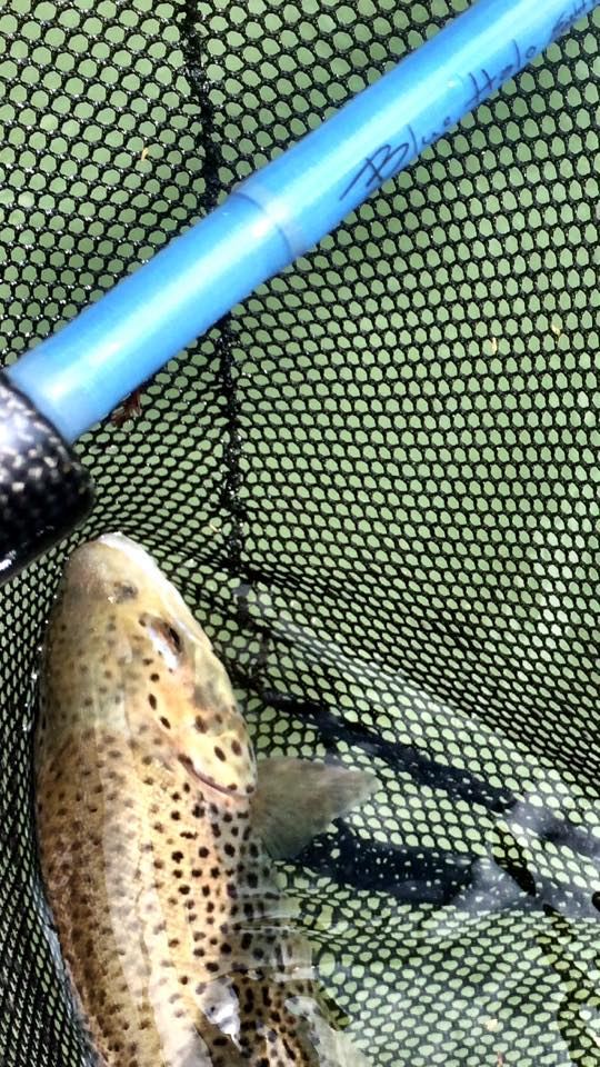 Fly fishing texas 2016 03 27 for Free fishing day texas