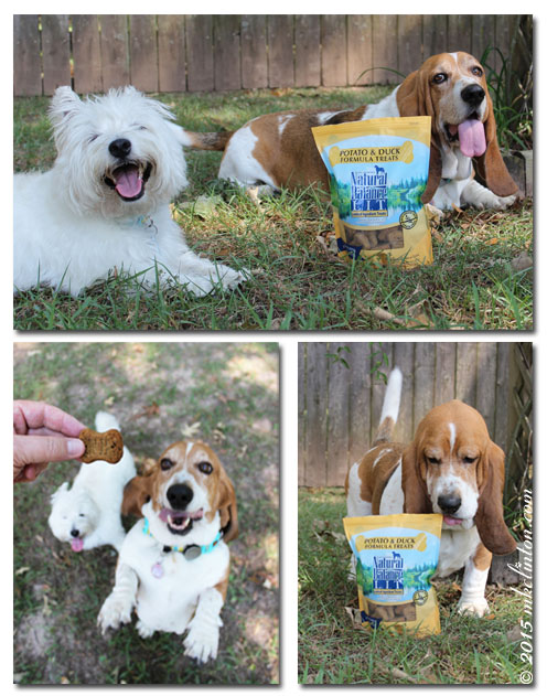 Westie and Basset collage enjoying Natural Balance Dog Biscuits