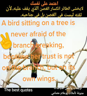 اعتماد الطائر