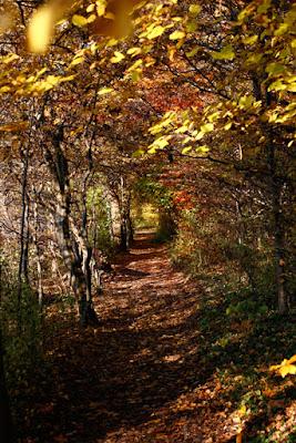 Ammersee im Herbst