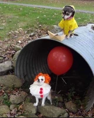 Cute Dog Halloween Costumes 2021