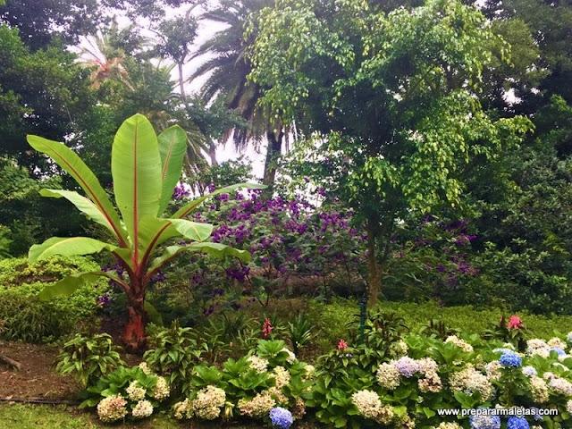 jardín gigante en Ponta Delgada Azores
