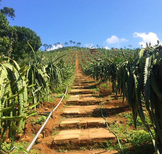 bukit naga jolong wisata pati