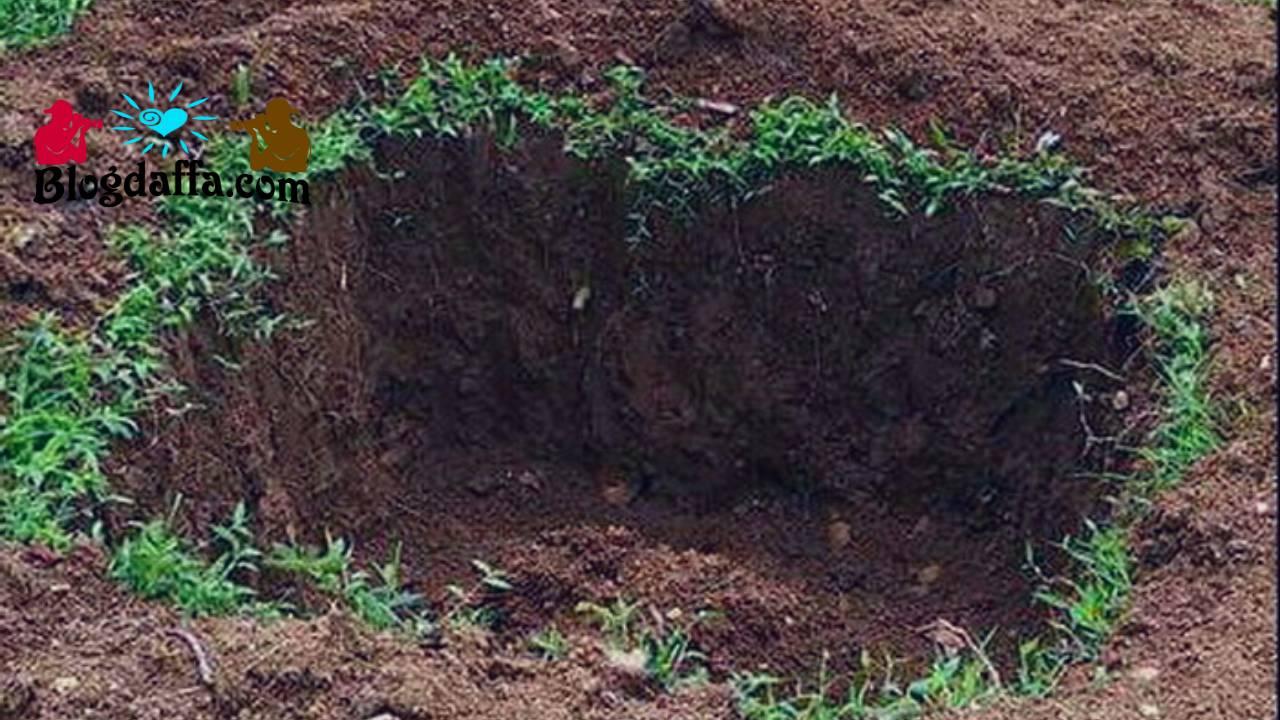 Galian tanah untuk menanam pohon