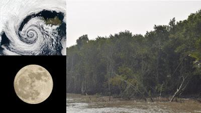 Sundarban's damages due to Cyclone Yaas in Bangladesh