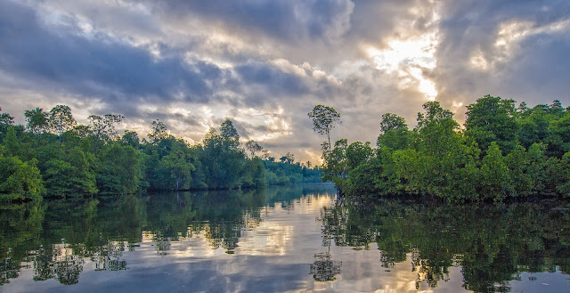 Dampak Kerusakan Hutan Mangrove