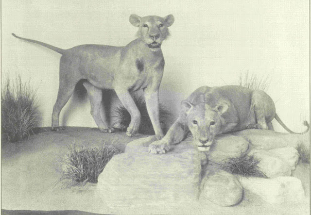 Tsavo Maneaters - Tamil Blog 4