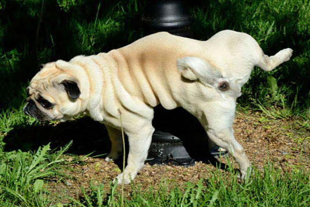 इलाका सिर्फ कुत्तों का होता है - Dog's Territory