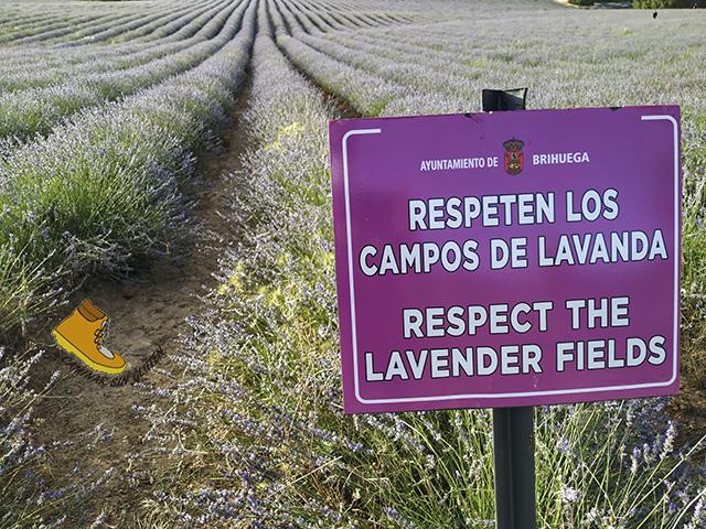RESPETEN LOS CAMPOS DE LAVANDA