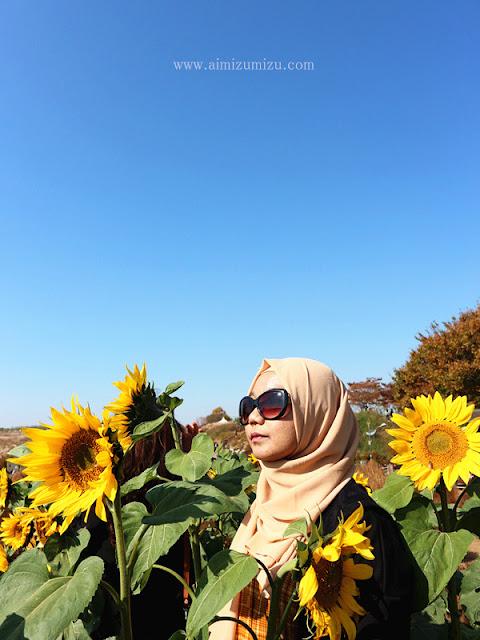 Taman Bunga Matahari di Korea