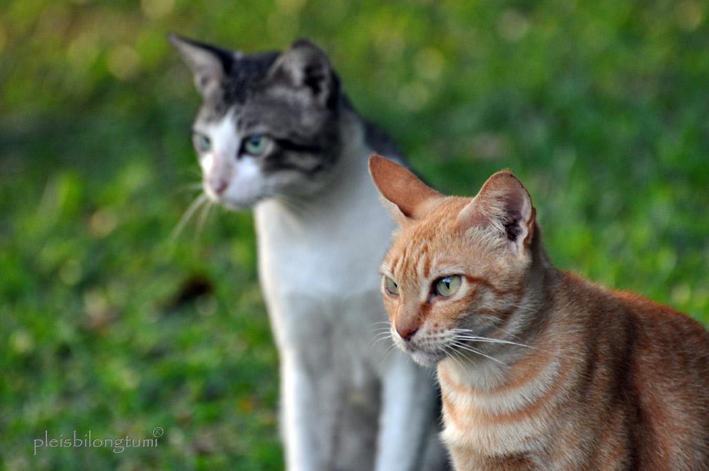 Lordofcaesar Lee Kucing Juga Termasuk Hewan Penjaga Rumah