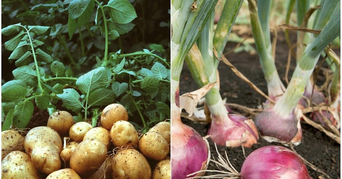 Pras Academy Sd Perkembangbiakan Vegetatif Alami Pada Tumbuhan