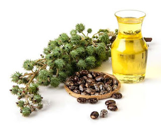 Leaves and beans and a vial of yellow liquid - the elements of Castor Oil.