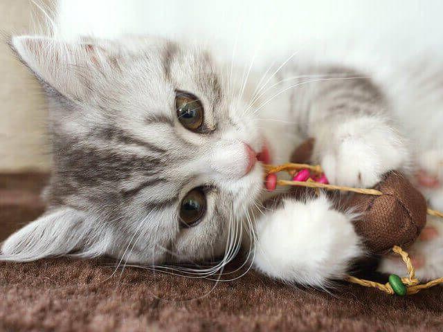 Unique Cat Names Guides - Persian Cat Blog