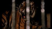 Wild Beasts 1984 Movie Image 1