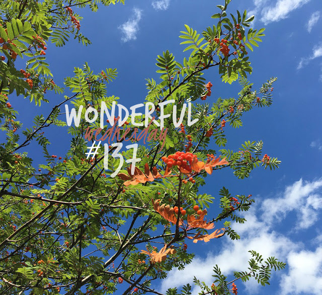Wonderful Wednesday #137