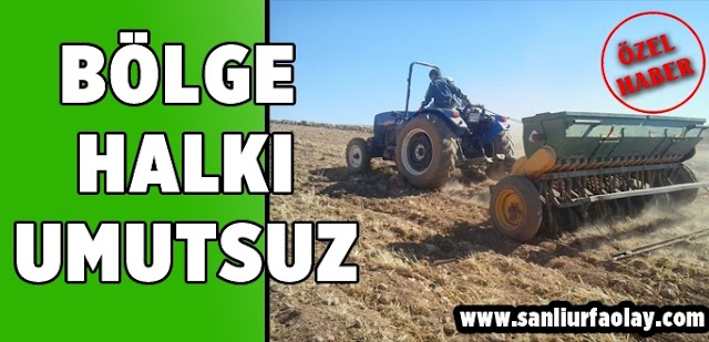 Bozova çiftçileri umutsuz