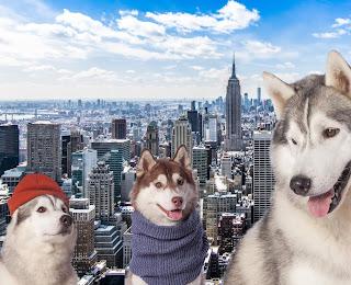 Joe Reginella erschafft in New York Mahnmale für Disaster die niemals passierten   StreetArt mal anders