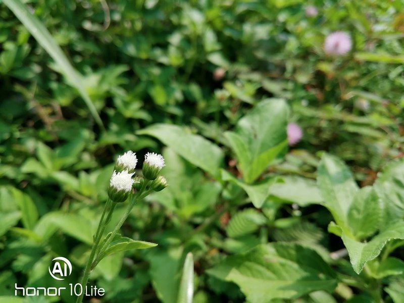 Hasil Foto Kamera Honor 10 Lite