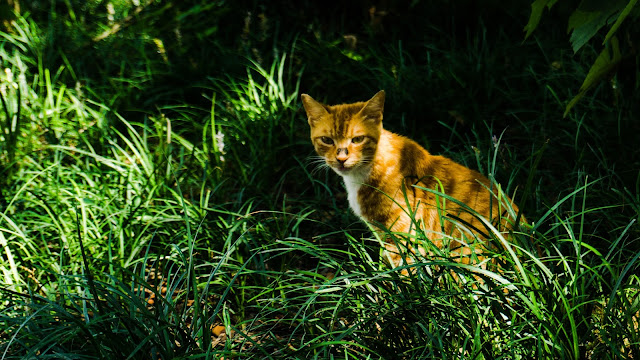 Stray cat captured in the park