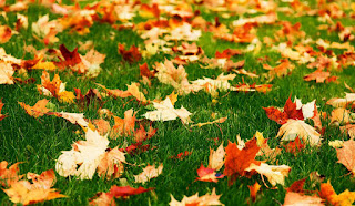Colorful fall leaves on a lush green lawn.