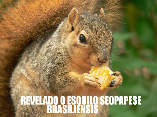 esquilo seopapese brasiliensis