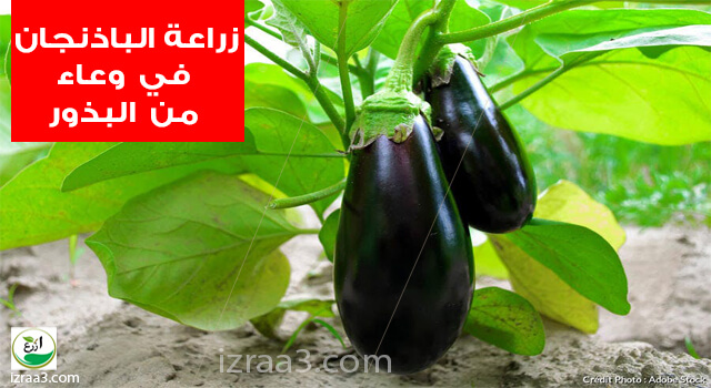 www.izraa3.com