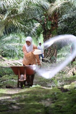 Siaran Pers Sawit Watch: Tolak Revisi UU Ketenagakerjaan