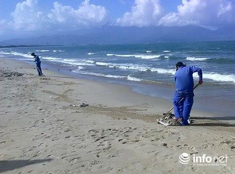 Đà Nẵng: Cá chết hàng loạt, trôi dạt vào bãi biển du lịch Xuân Thiều ảnh 3