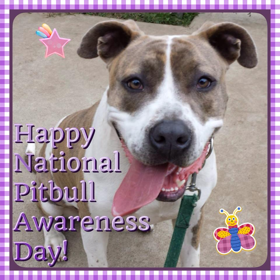 National Pit Bull Awareness Day Wishes for Whatsapp