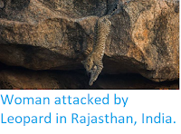 https://sciencythoughts.blogspot.com/2018/04/woman-attacked-by-leopard-in-rajasthan.html