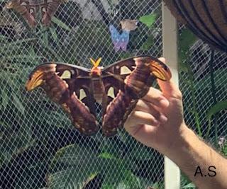 حديقة الفراشات في دبي.. ما لن تجده علي ويكيبيديا