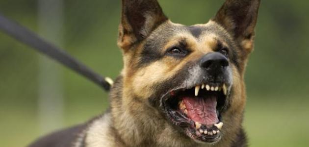How to learn ferocious dogs ( no 1) | cat and dogs