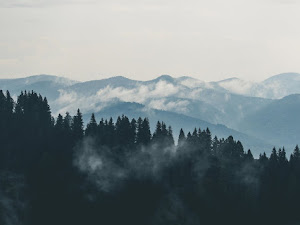 Forest mountains fog clouds