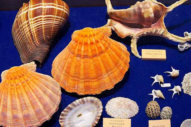 seashells on display