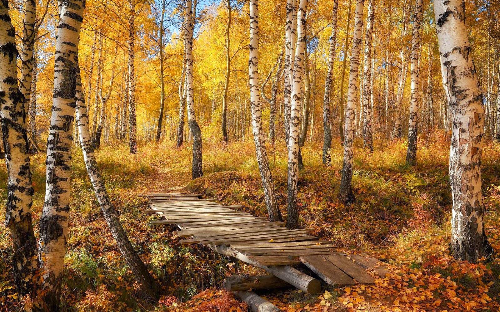 Bos met bomen, sloot en houten brug in de herfst