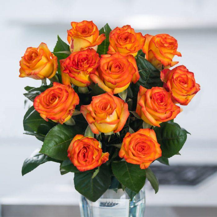gambar bunga mawar orange indah