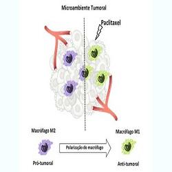 Investigando o efeito abscopal como tratamento para o câncer