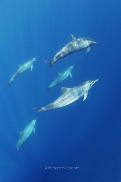 PaparazSea, Scuba Diving, Tubbataha, Dive Philippines